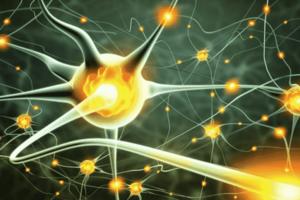 Green neuron firing in the brain